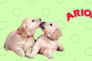 Perros con logo de Arion