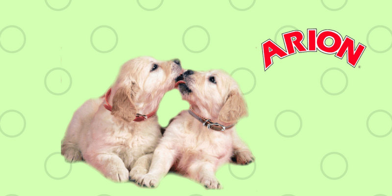 Arion perros