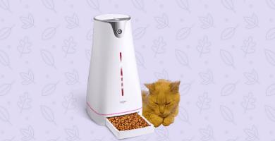 Gato comiendo de comedero automático