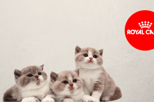 gatos con logo royal canin