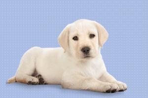 mejor pienso para cachorros (1)