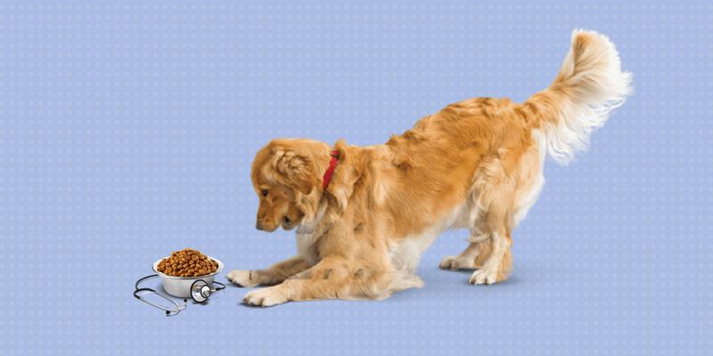 Perro con pienso con un estetoscopio