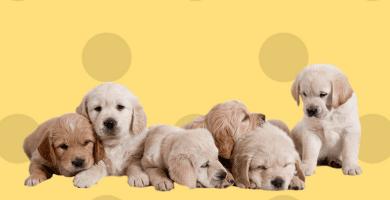 pienso hipoalergenico para perros