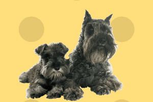 pienso ligth para perros