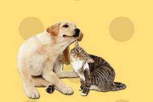 pienso mascotas esterilizadas
