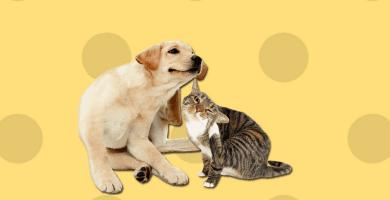 Perro y gato acariciándose