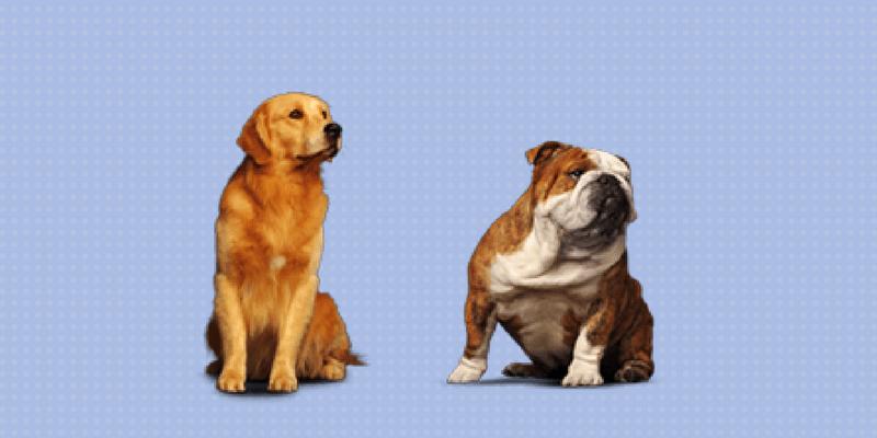 2 perros mirando hacia la derecha