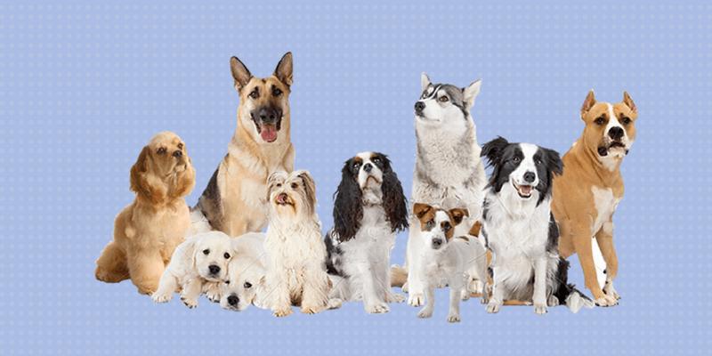 10 perros de diferentes razas
