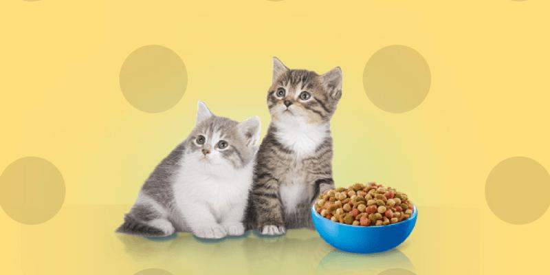 Gatos pequeños comiendo pienso
