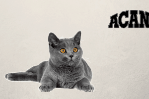 pienso para gatos acana