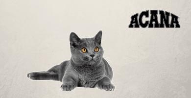 Gato gris con logo de Acana