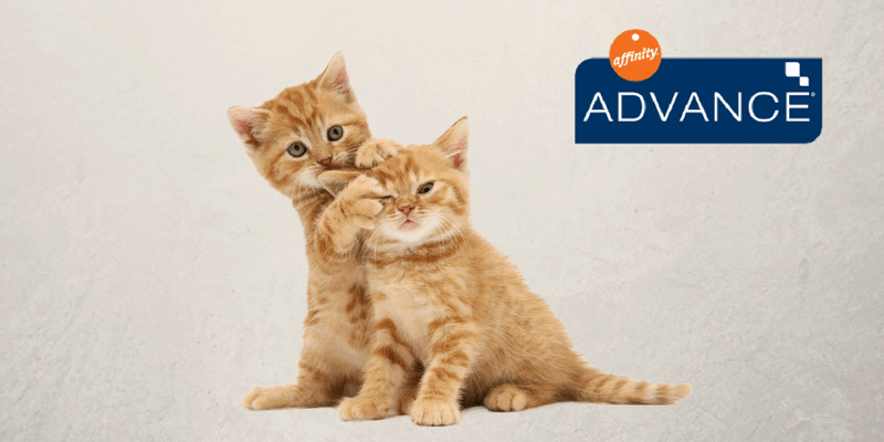 pienso para gatos advance