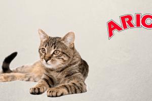 Gato rayado con logo de Arion