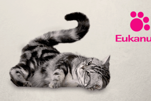 Gato acostado con logo de Eukanuba