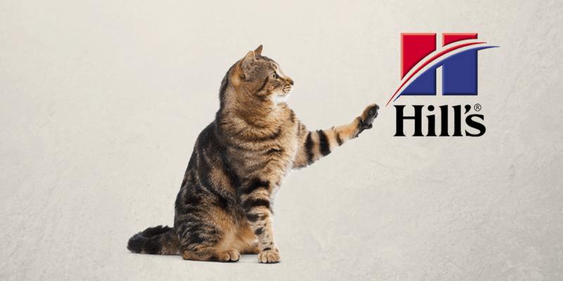 Gato rayado con logo de Hills