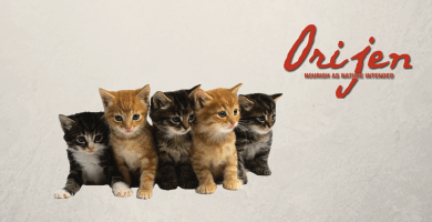 Gatos con logo de Orijen