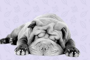 10 alimentos malos para perro