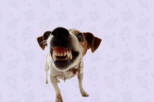 Copia de 7 metodos perro agresivo