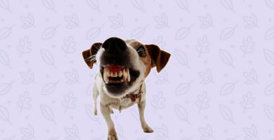 Perro mostrando los dientes