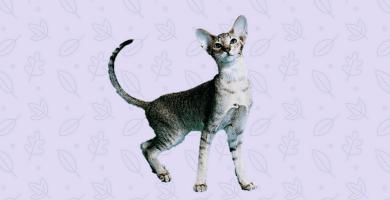 Gato delgado mirando hacia arriba