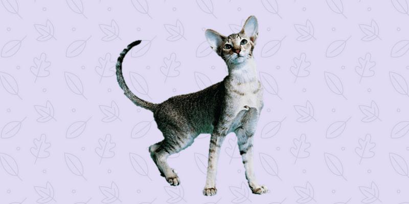 educar a un gato