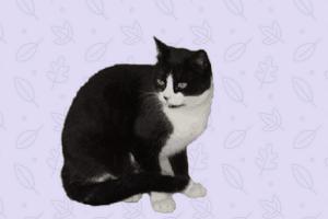 lenguaje de los gatos