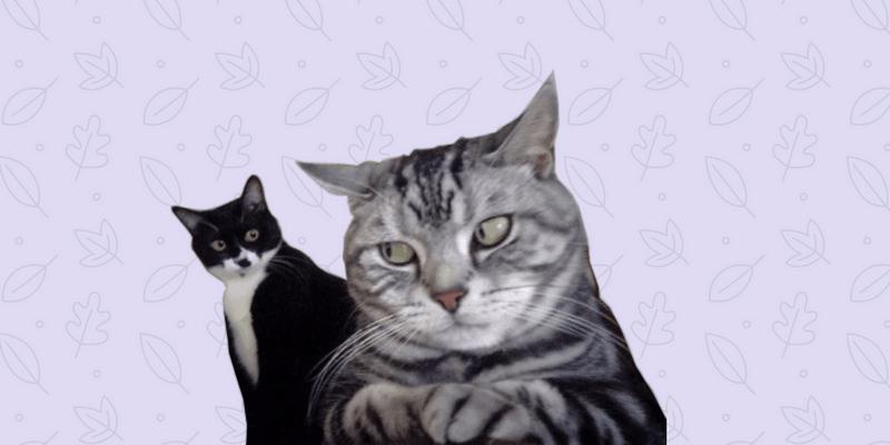 Dos gatos, uno mirando de reojo