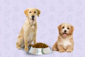 6 tips alimento perfecto perros
