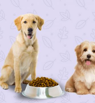 perros color claro comiendo pienso
