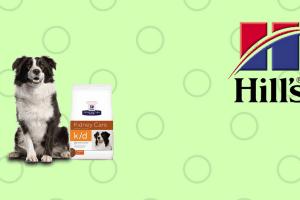 Perro con pienso y logo de Hills
