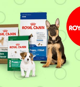 Perros con pienso y logo de Royal Canin