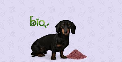 Perro negro comiendo pienso bio