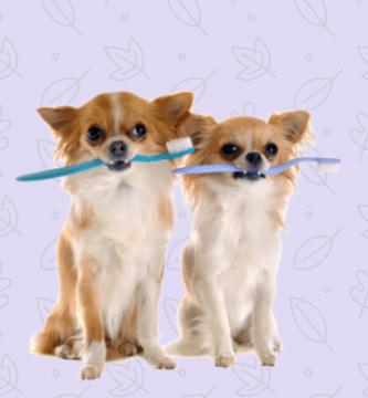 Perros pequeños con cepillo de dientes