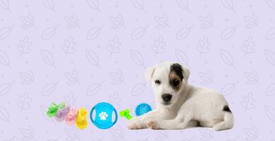 Cachorro con mordedores para perros