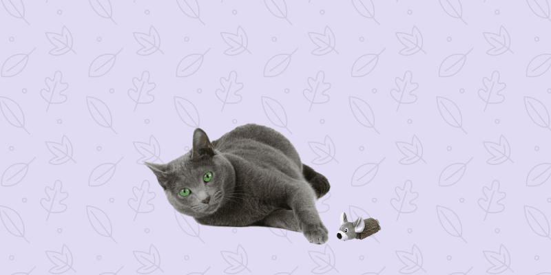 gato echado con juguete