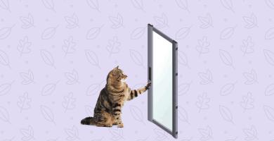gato tocando una puerta