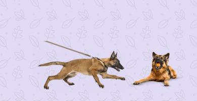 perros paseando