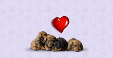 voluntarios de refugios de animales