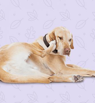 Como detectar pulgas y garrapatas en nuestro perro